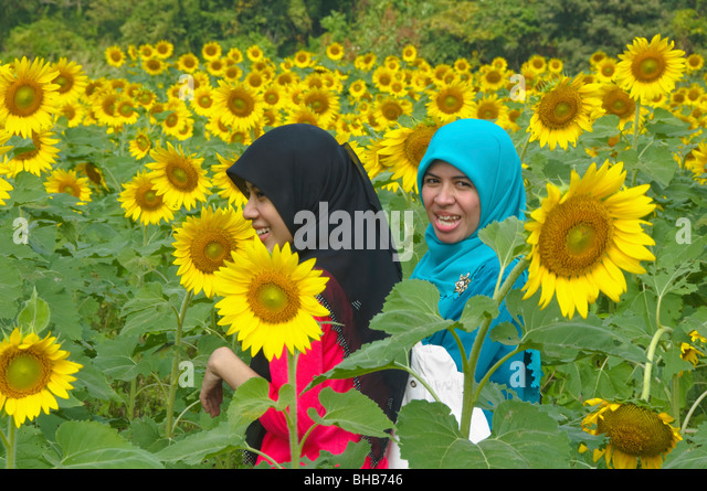 "sunflower muslim single women I encourage every woman dating a muslim man or thinking about it bees are attracted to flower and ""muslim men preying on western women"" faith."