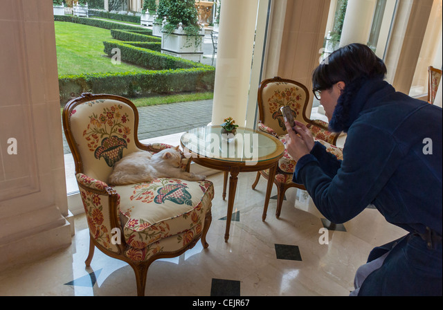 Paris france japanese tourist taking photos of house cat for Hotel francs tokyo