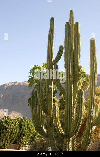 Cactus Cacti Desert Deserts Tall Long Spikey Spikes Spike